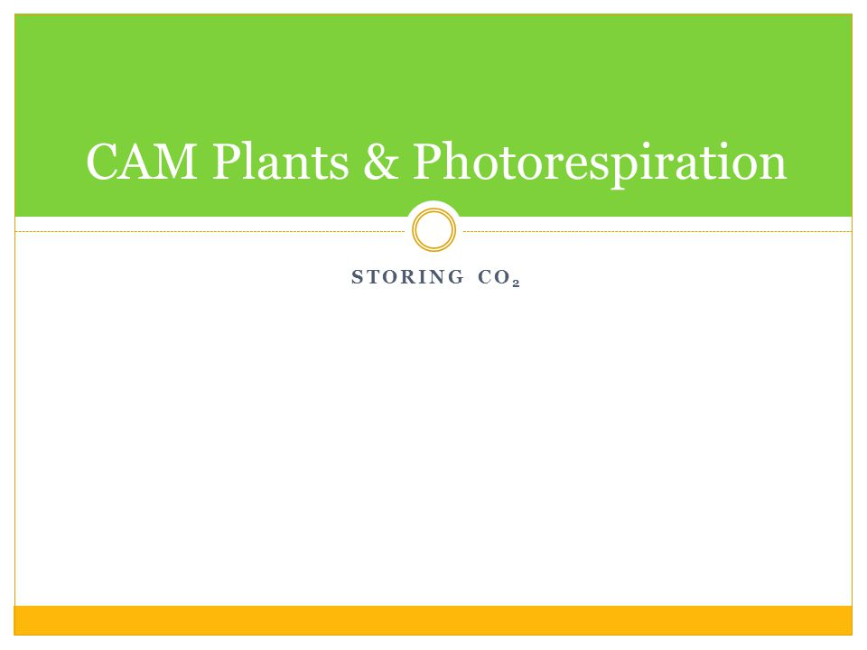 STORING CO 2 CAM Plants & Photorespiration