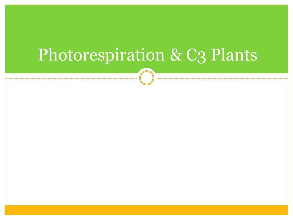 Photorespiration & C3 Plants
