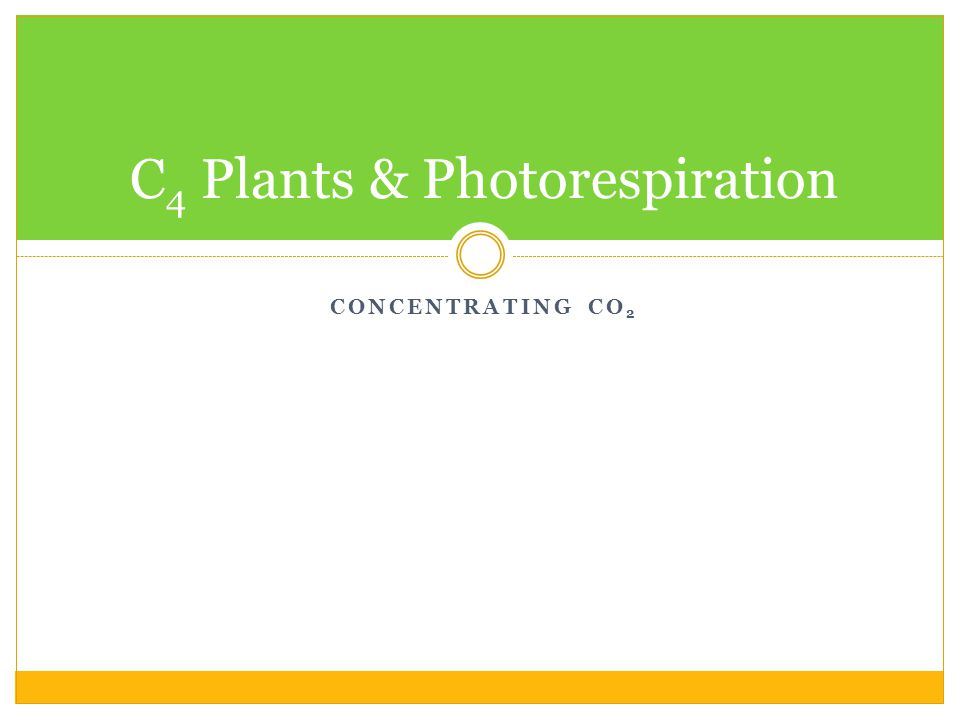 CONCENTRATING CO 2 C 4 Plants & Photorespiration