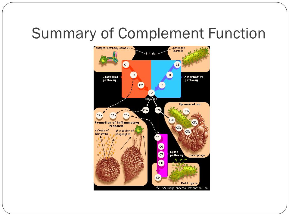 Summary of Complement Function