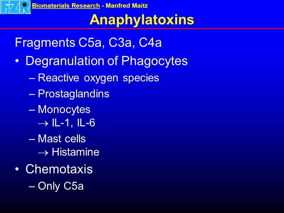 Biomaterials ResearchBiomaterials Research - Manfred Maitz Anaphylatoxins Fragments C5a, C3a, C4a Degranulation of Phagocytes –Reactive oxygen species –Prostaglandins –Monocytes  IL-1, IL-6 –Mast cells  Histamine Chemotaxis –Only C5a