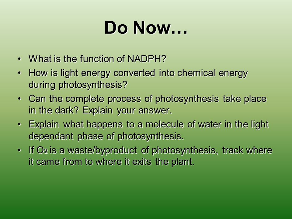 Do Now… What is the function of NADPH What is the function of NADPH.