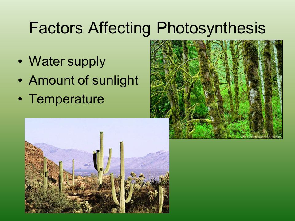 Factors Affecting Photosynthesis Water supply Amount of sunlight Temperature