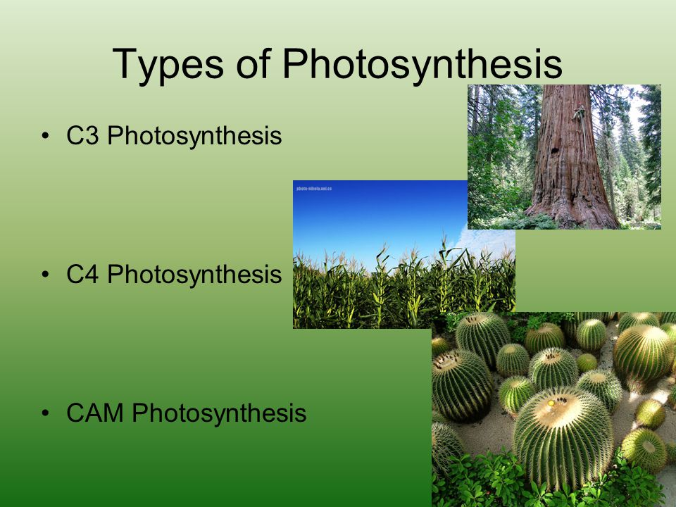 Types of Photosynthesis C3 Photosynthesis C4 Photosynthesis CAM Photosynthesis