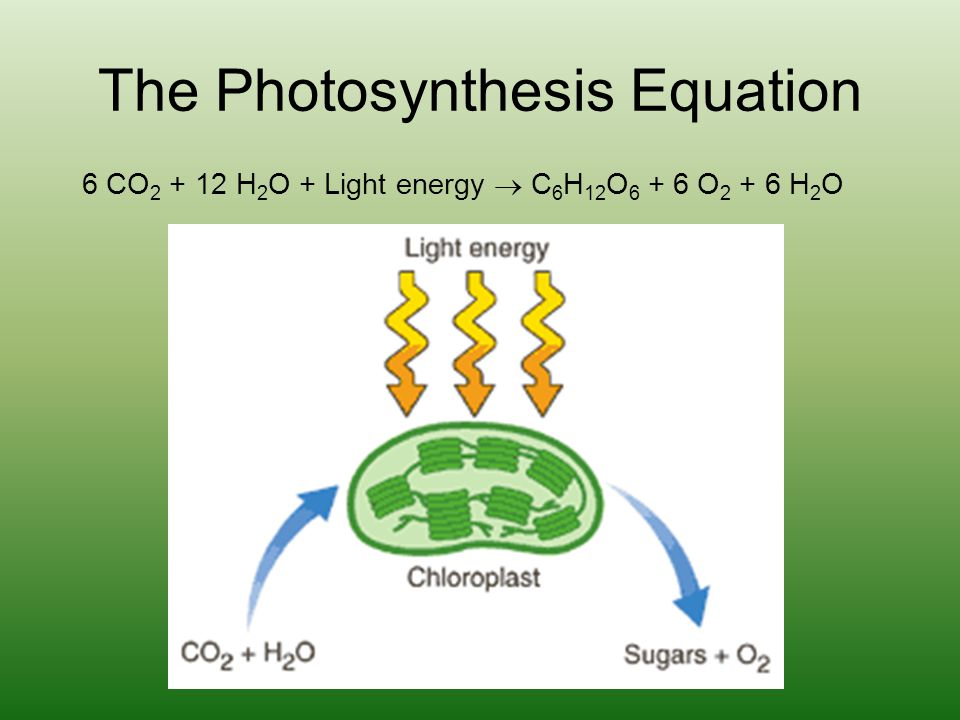 The Photosynthesis Equation 6 CO 2 + 12 H 2 O + Light energy  C 6 H 12 O 6 + 6 O 2 + 6 H 2 O