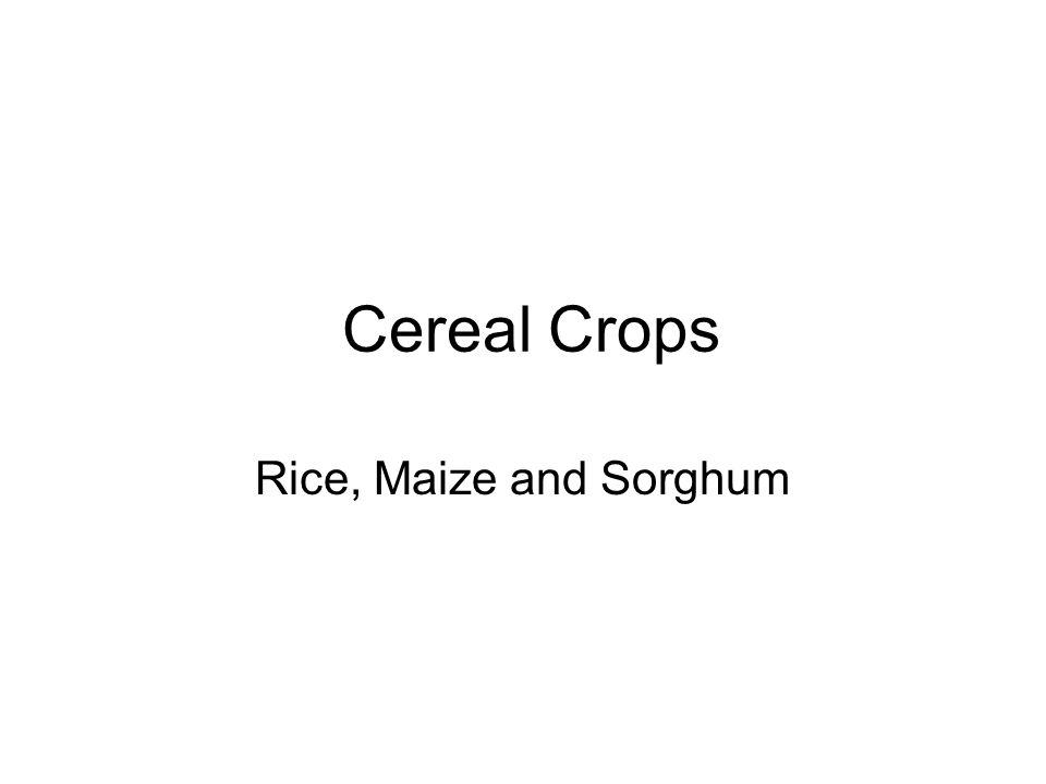 Cereals- the worlds staple foods Cereals are all members of the grass family Examples include rice, wheat, maize and sorghum They are grown for their seeds (grains) which are high in carbohydrates and protein The water content of the grains is low compared to other vegetables