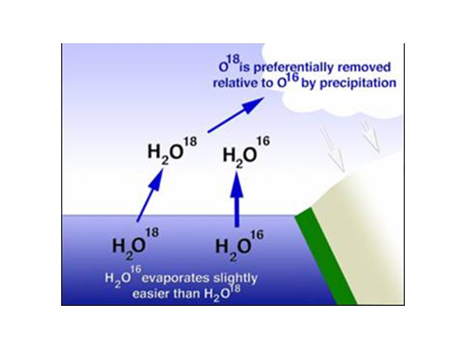 Speleothem-carbon isotopes C4 grasses show high  13 C values.