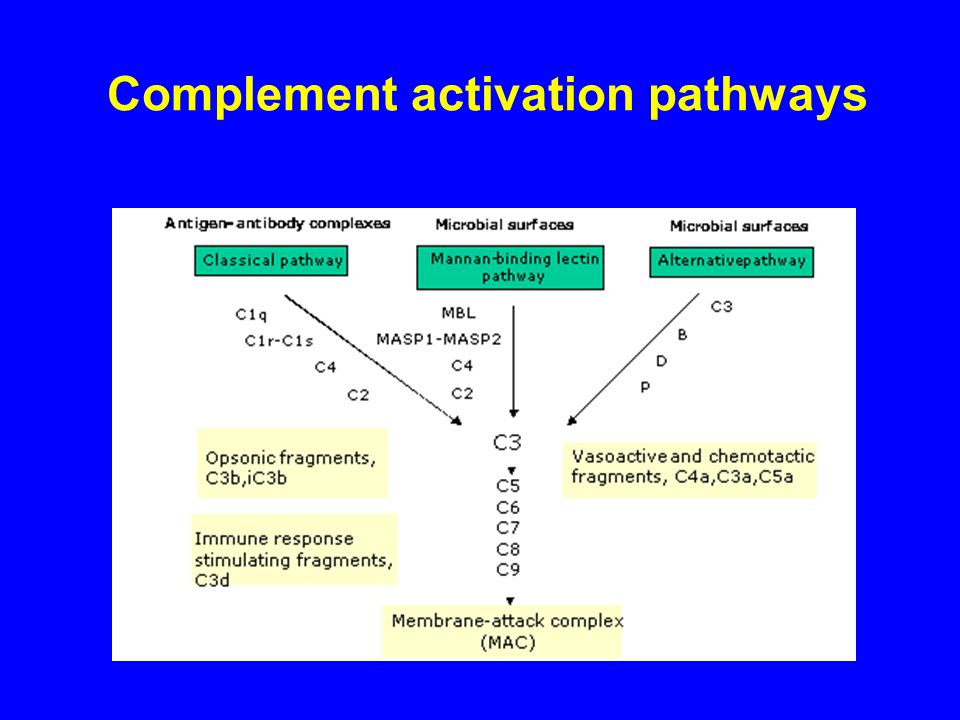Complement activation pathways