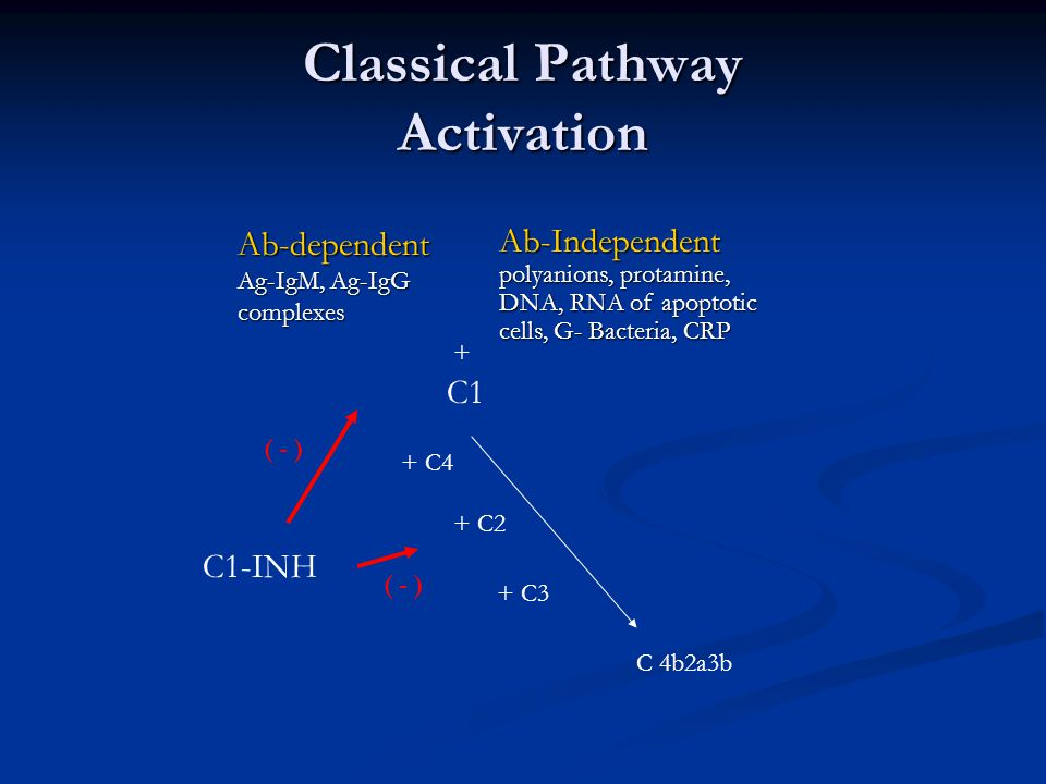 Classical Pathway Activation Ab-dependent Ag-IgM, Ag-IgG complexes Ab-Independent polyanions, protamine, DNA, RNA of apoptotic cells, G- Bacteria, CRP C1 + + C4 + C2 + C3 C 4b2a3b C1-INH ( - )
