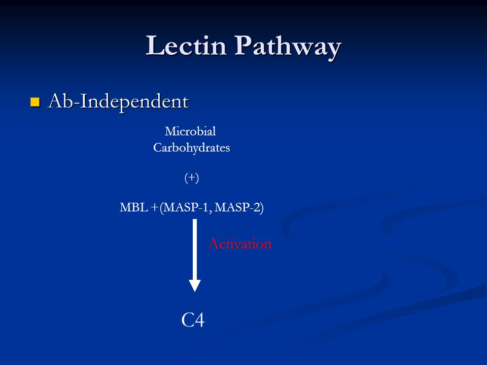 Lectin Pathway Ab-Independent Ab-Independent C4 Activation Microbial Carbohydrates (+) MBL +(MASP-1, MASP-2)