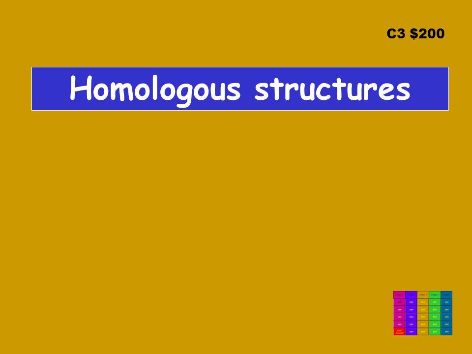 C3 $200 Homologous structures