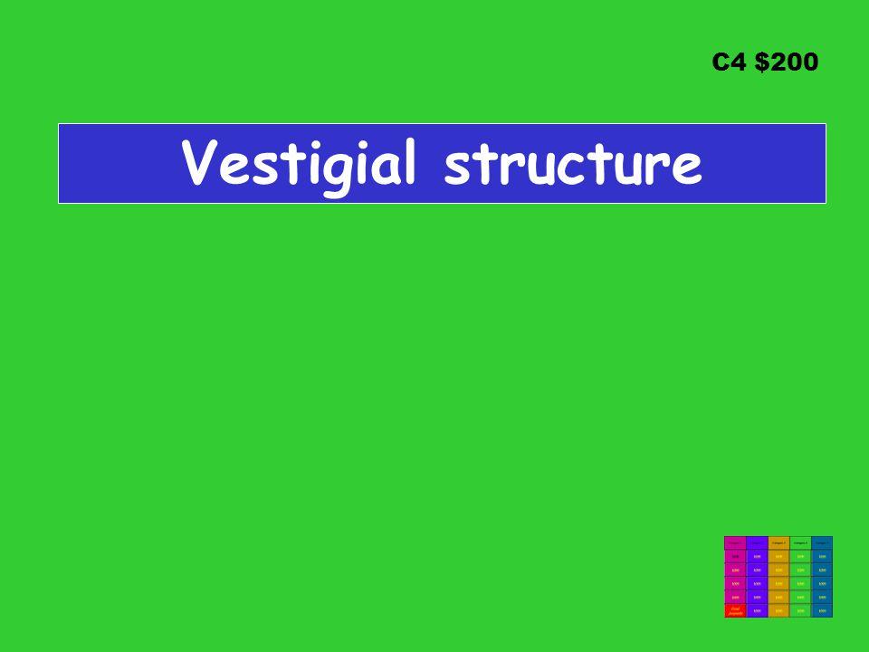 C4 $200 Vestigial structure