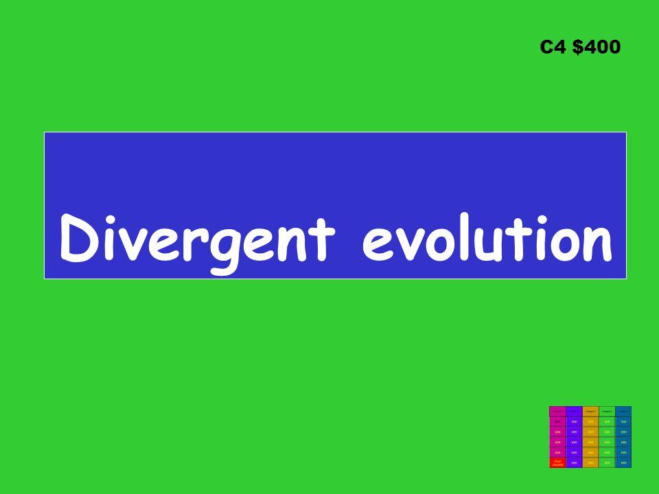 C4 $400 Divergent evolution