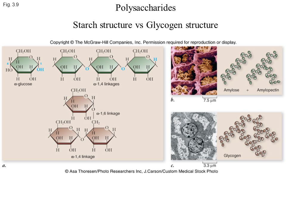 Fig. 3.9 Polysaccharides Starch structure vs Glycogen structure