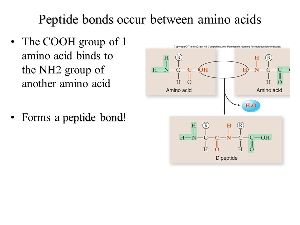 Peptide bonds Peptide bonds occur between amino acids The COOH group of 1 amino acid binds to the NH2 group of another amino acid peptide bondForms a peptide bond!