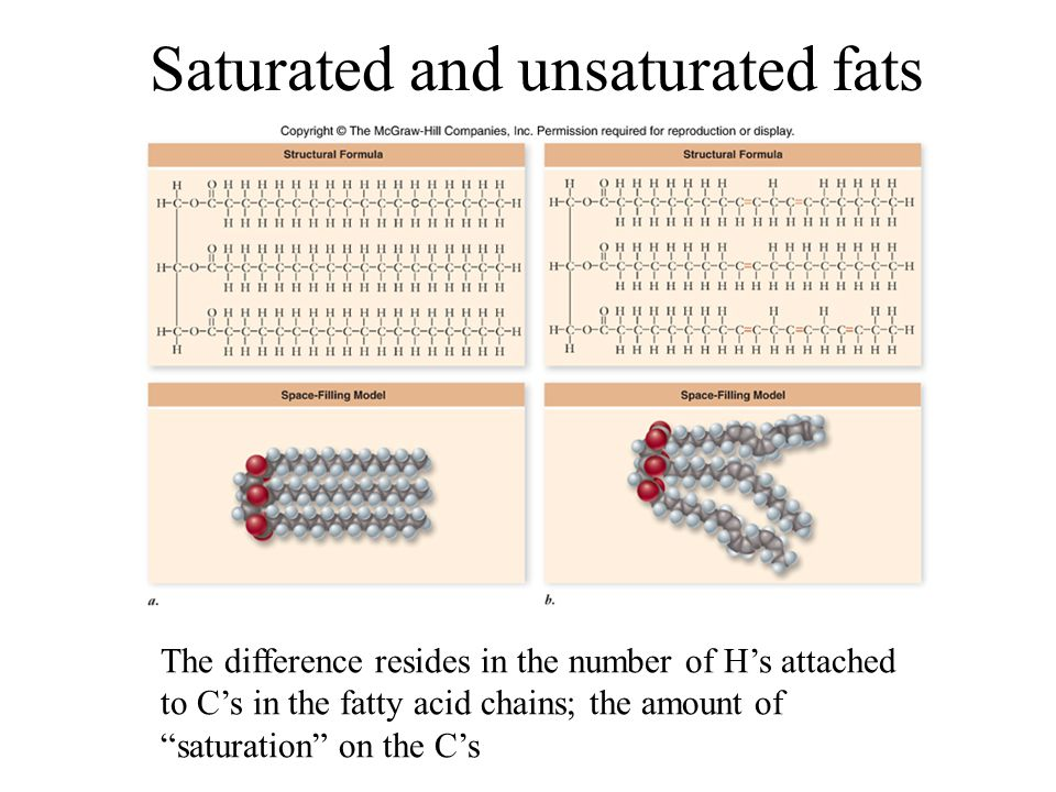 Saturated and unsaturated fats The difference resides in the number of H's attached to C's in the fatty acid chains; the amount of saturation on the C's