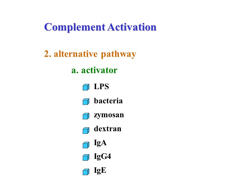 Complement Activation 2. alternative pathway a. activator LPS bacteria zymosan dextran IgA IgG4 IgE