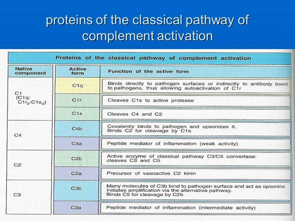 proteins of the classical pathway of complement activation