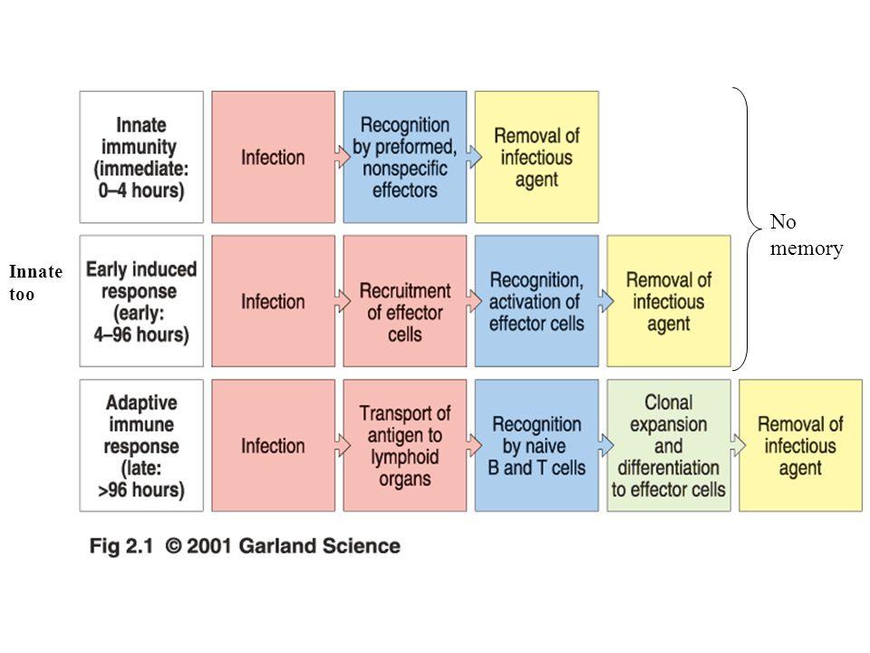 Certain defense mechanism seem to fall between innate and adaptive immunity.