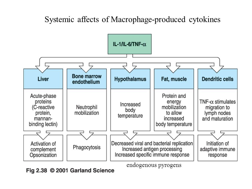 Systemic affects of Macrophage-produced cytokines endogenous pyrogens