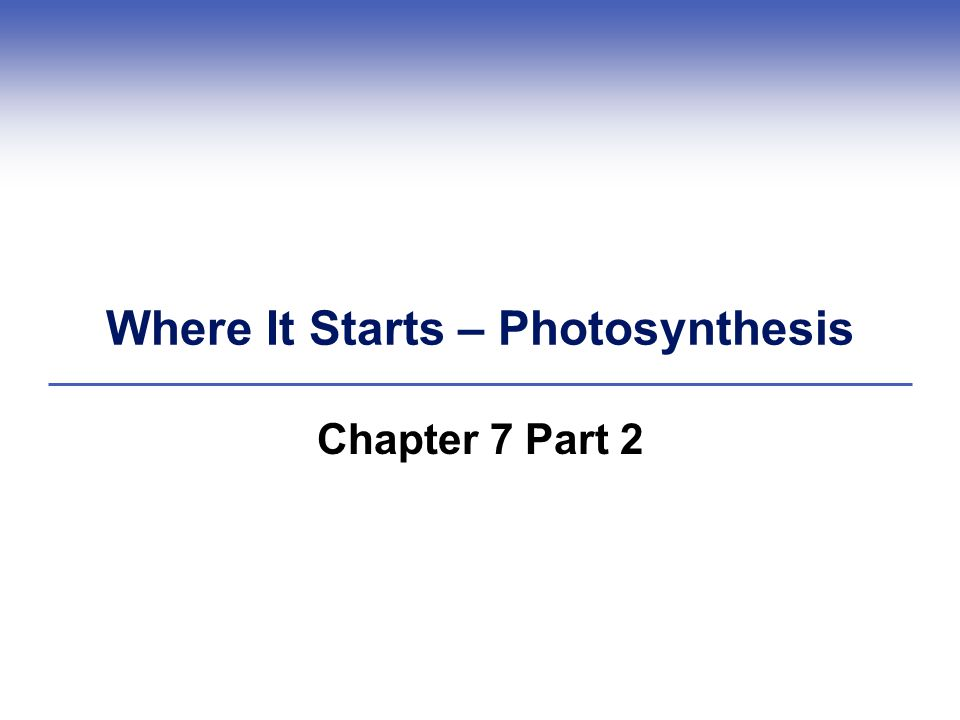 Where It Starts – Photosynthesis Chapter 7 Part 2