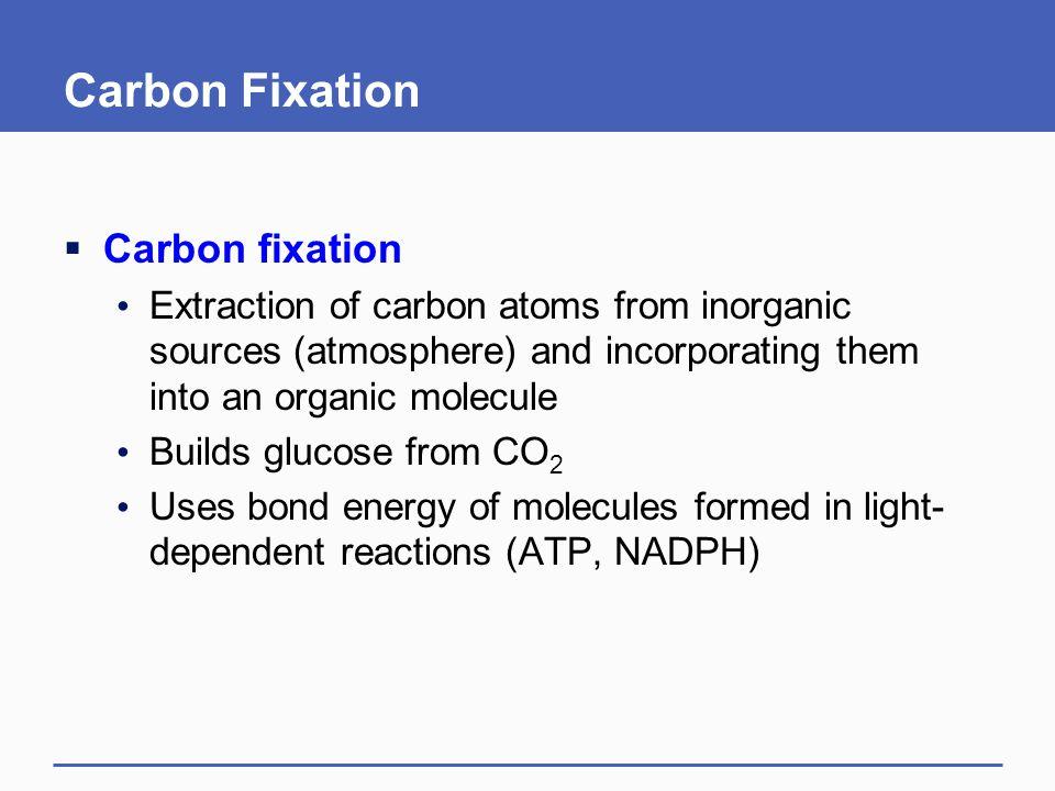 mesophyll cell O2O2 CO 2 RuBP glycolate Calvin– Benson Cycle PGA sugar ATP NADPH A C3 plants.