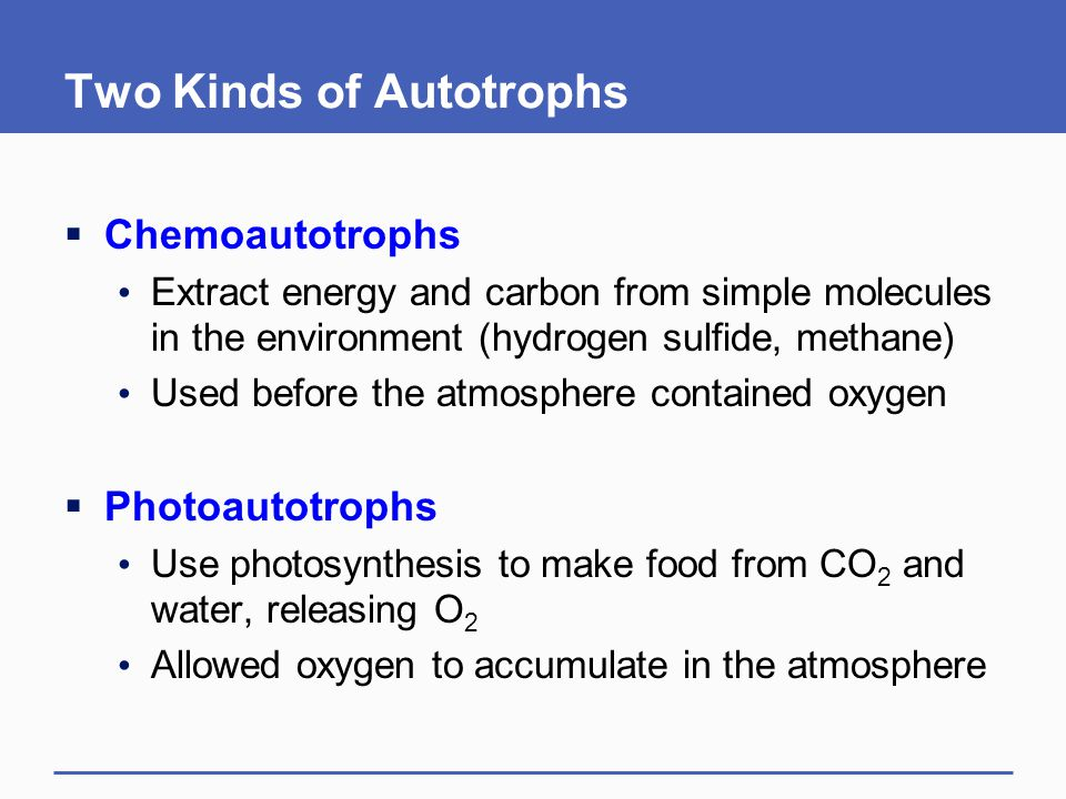 Two Kinds of Autotrophs  Chemoautotrophs Extract energy and carbon from simple molecules in the environment (hydrogen sulfide, methane) Used before the atmosphere contained oxygen  Photoautotrophs Use photosynthesis to make food from CO 2 and water, releasing O 2 Allowed oxygen to accumulate in the atmosphere