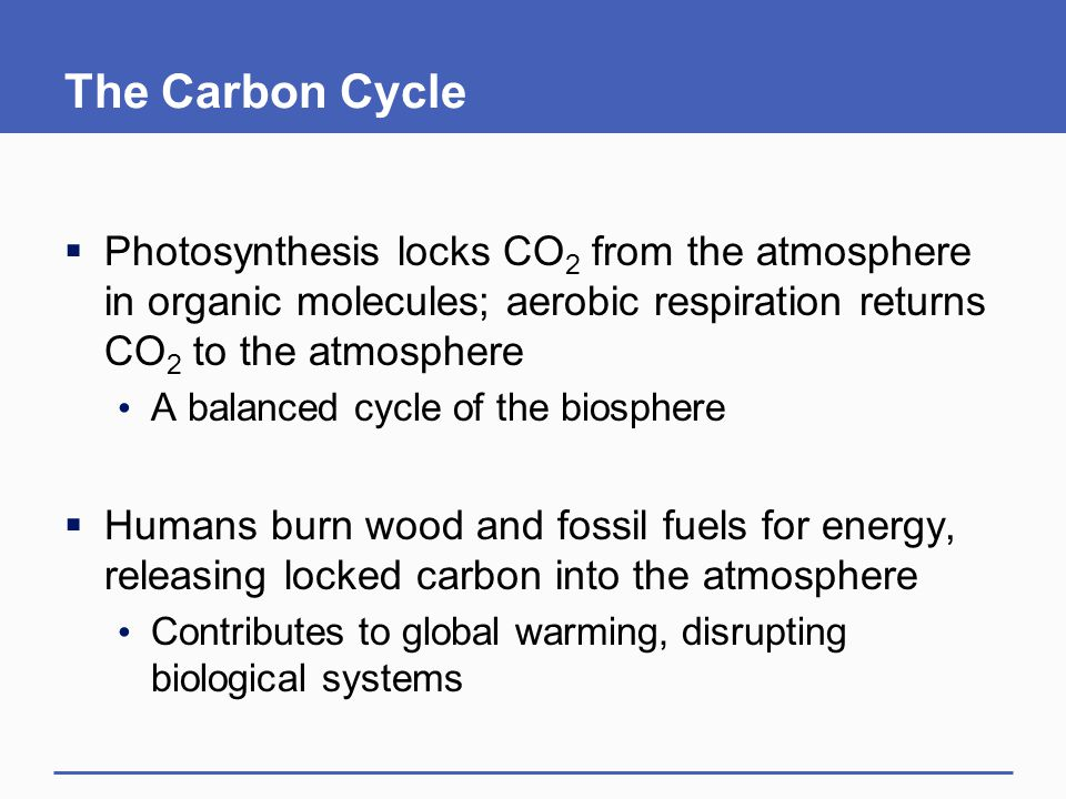 The Carbon Cycle  Photosynthesis locks CO 2 from the atmosphere in organic molecules; aerobic respiration returns CO 2 to the atmosphere A balanced cycle of the biosphere  Humans burn wood and fossil fuels for energy, releasing locked carbon into the atmosphere Contributes to global warming, disrupting biological systems