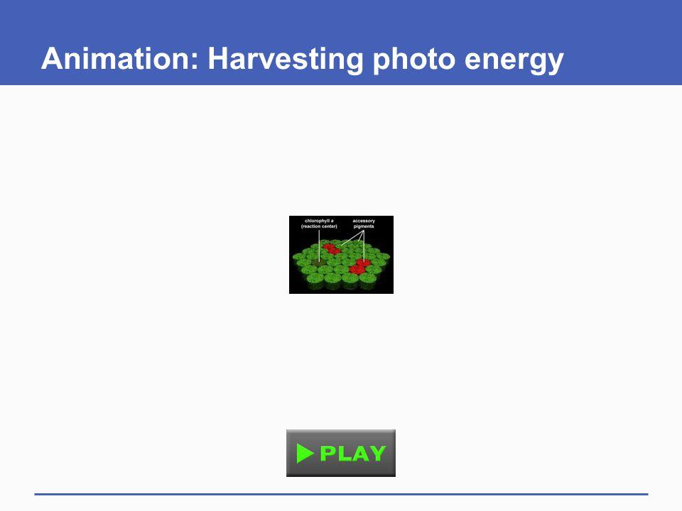 Animation: Harvesting photo energy