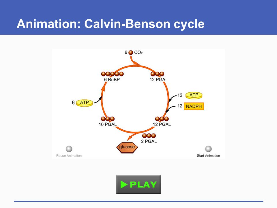 7.7 Adaptations: Different Carbon-Fixing Pathways  Environments differ, and so do details of photosynthesis C3 plants C4 plants CAM plants