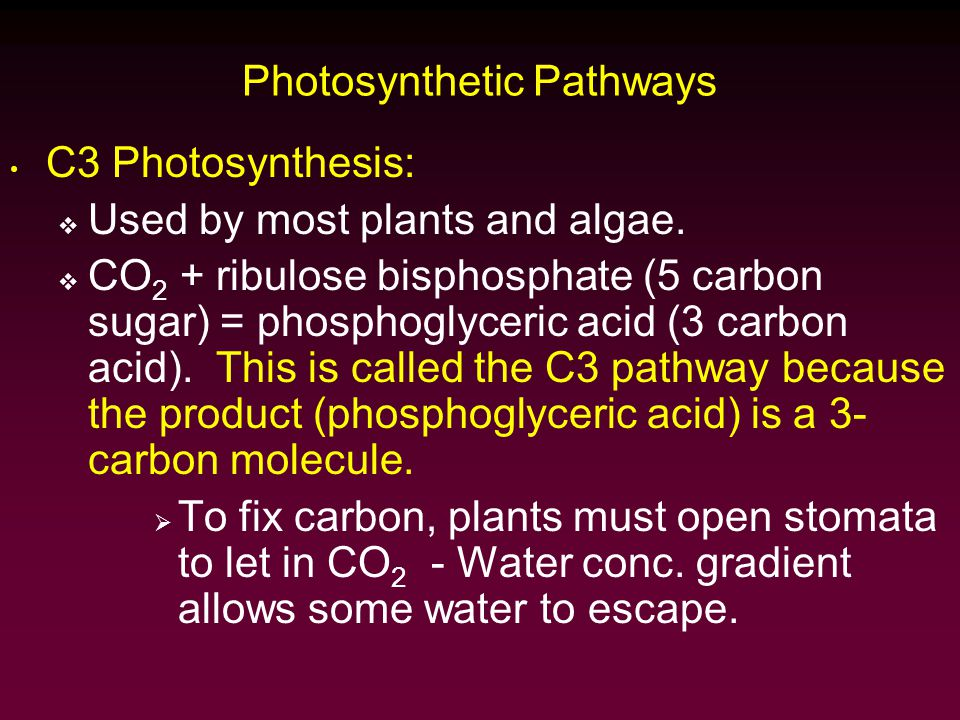Photosynthetic Pathways C3 Photosynthesis:  Used by most plants and algae.