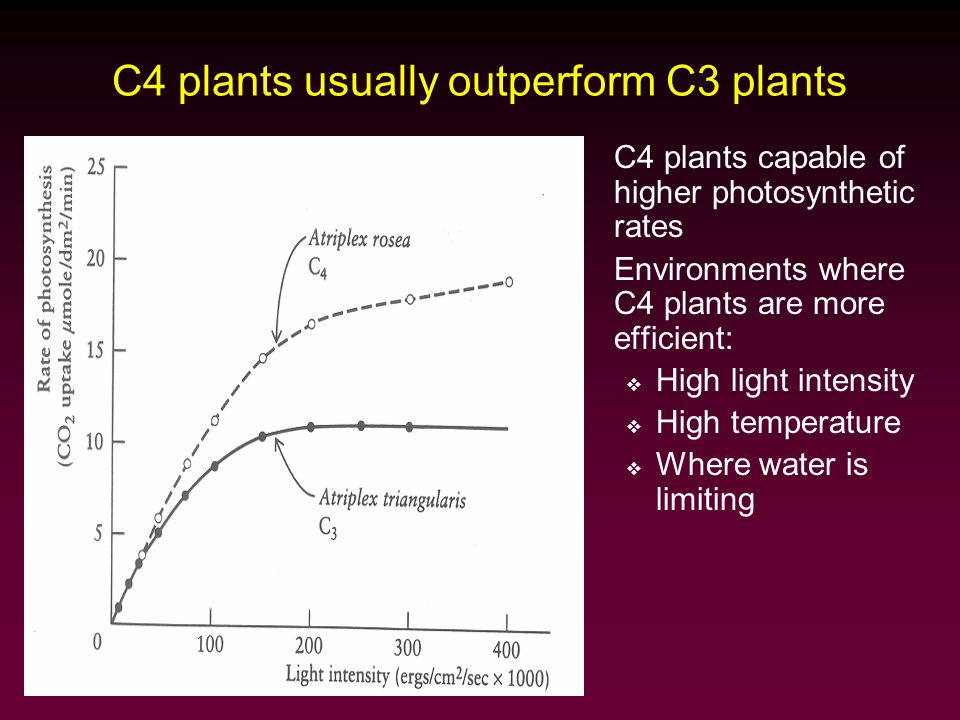 Why haven't C4 plants taken over the world.