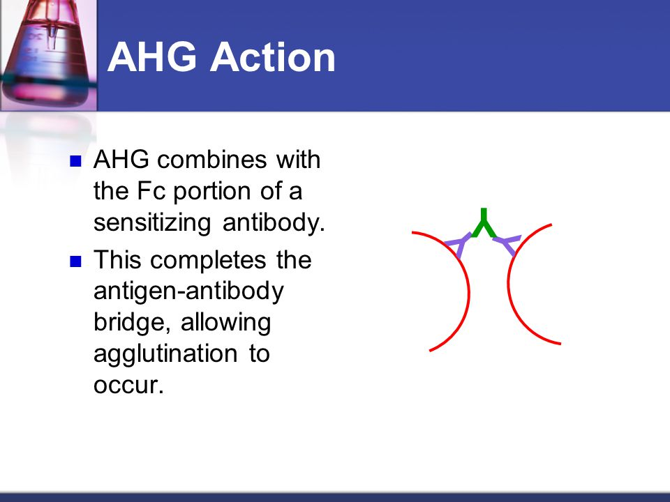 AHG Action AHG combines with the Fc portion of a sensitizing antibody. This completes the antigen-antibody bridge, allowing agglutination to occur. Y