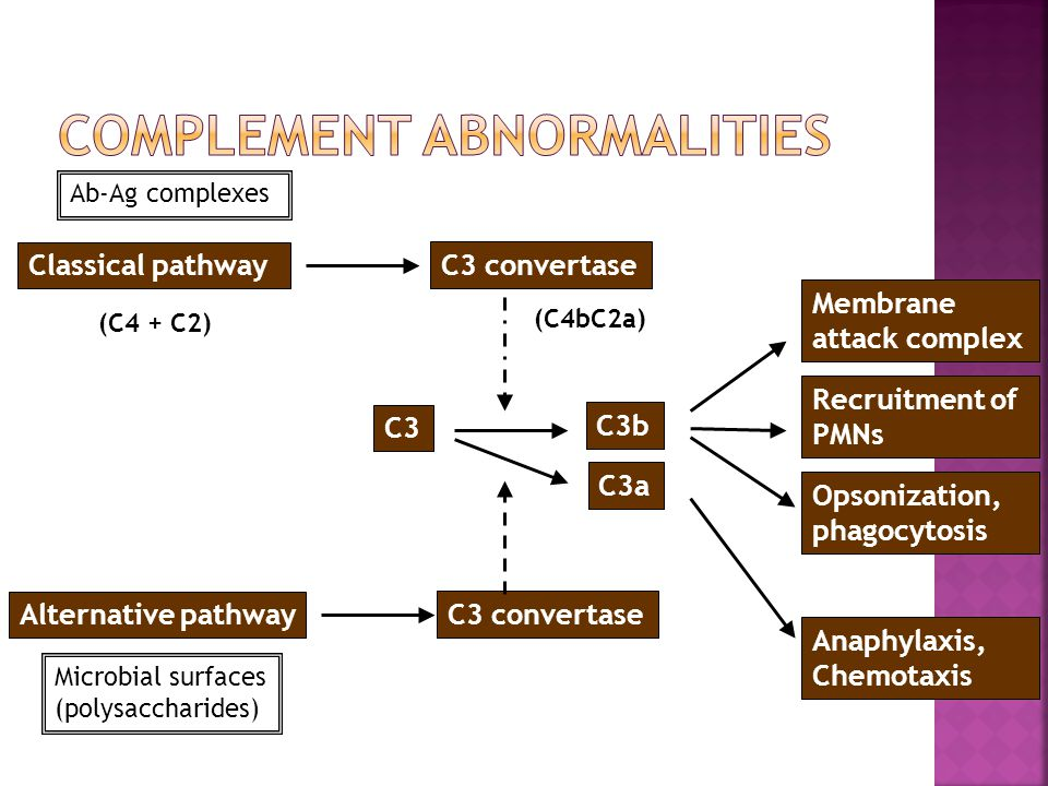Ab-Ag complexes Classical pathway C3 convertase Microbial surfaces (polysaccharides) Alternative pathway C3 convertase C3 C3b C3a (C4 + C2) (C4bC2a) M