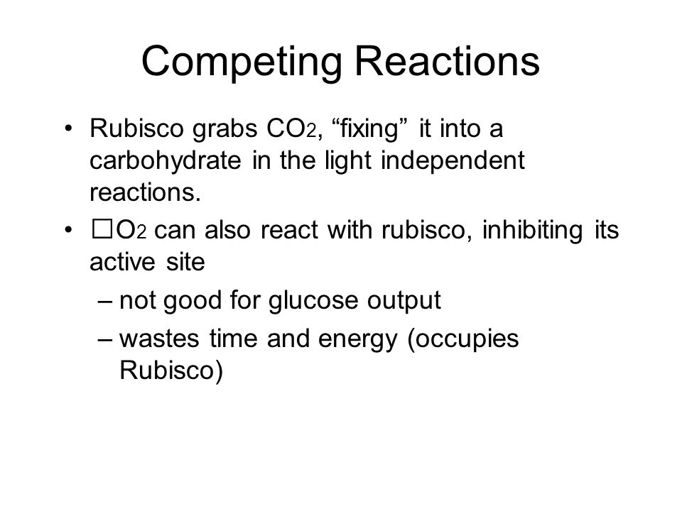 Competing Reactions Rubisco grabs CO 2, fixing it into a carbohydrate in the light independent reactions.