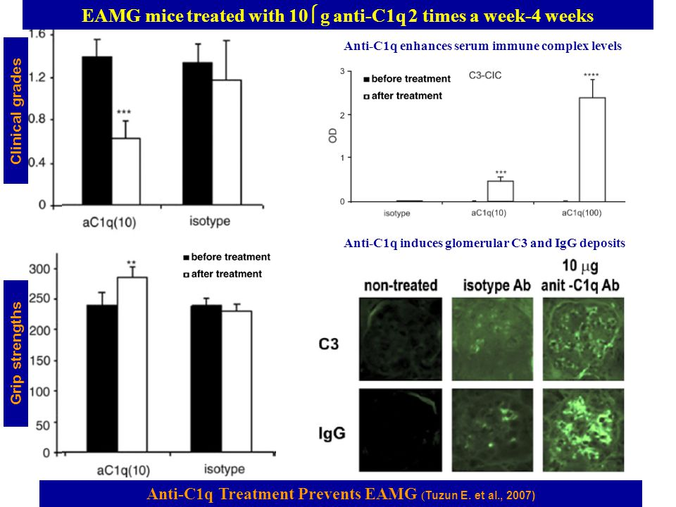 Anti-C1q Treatment Prevents EAMG ( Tuzun E. et al., 2007) Grip strengths Clinical grades EAMG mice treated with 10  g anti-C1q 2 times a week-4 weeks