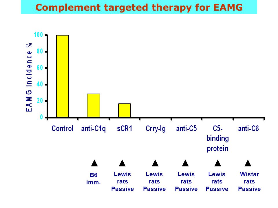 Complement targeted therapy for EAMG B6 imm.
