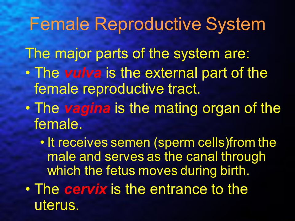 Female Reproductive System The major parts of the system are: The vulva is the external part of the female reproductive tract. The vagina is the matin