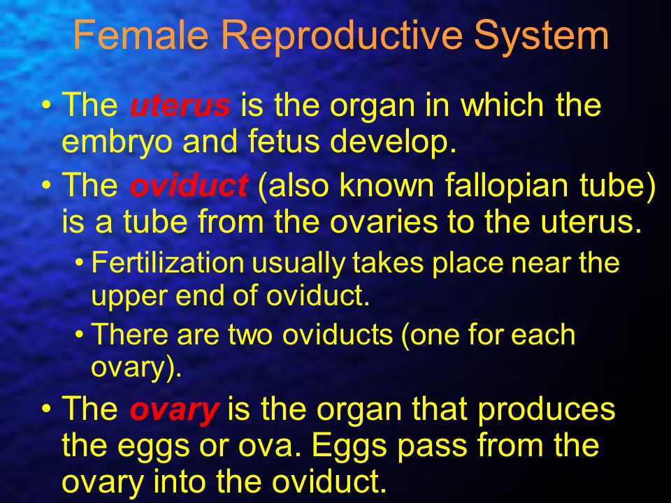 Female Reproductive System The uterus is the organ in which the embryo and fetus develop. The oviduct (also known fallopian tube) is a tube from the o