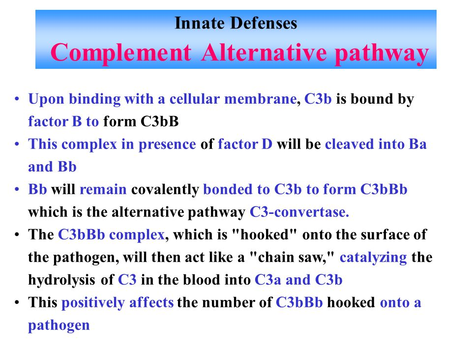 Innate Defenses Complement Alternative pathway Upon binding with a cellular membrane, C3b is bound by factor B to form C3bB This complex in presence of factor D will be cleaved into Ba and Bb Bb will remain covalently bonded to C3b to form C3bBb which is the alternative pathway C3-convertase.