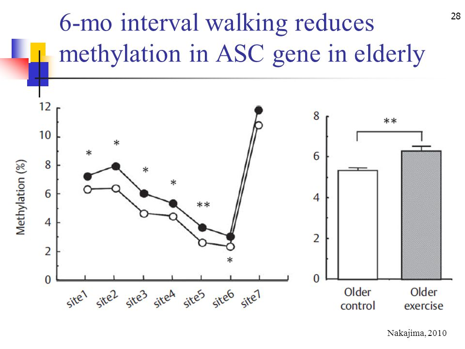 28 6-mo interval walking reduces methylation in ASC gene in elderly Nakajima, 2010