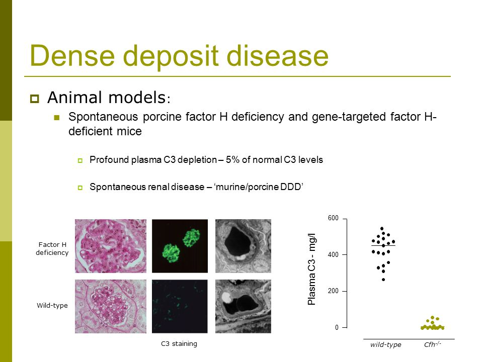 Dense deposit disease  Animal models : Spontaneous porcine factor H deficiency and gene-targeted factor H- deficient mice  Profound plasma C3 depletion – 5% of normal C3 levels  Spontaneous renal disease – 'murine/porcine DDD' Factor H deficiency Wild-type C3 staining wild-type 0 200 400 600 Cfh -/- Plasma C3 - mg/l
