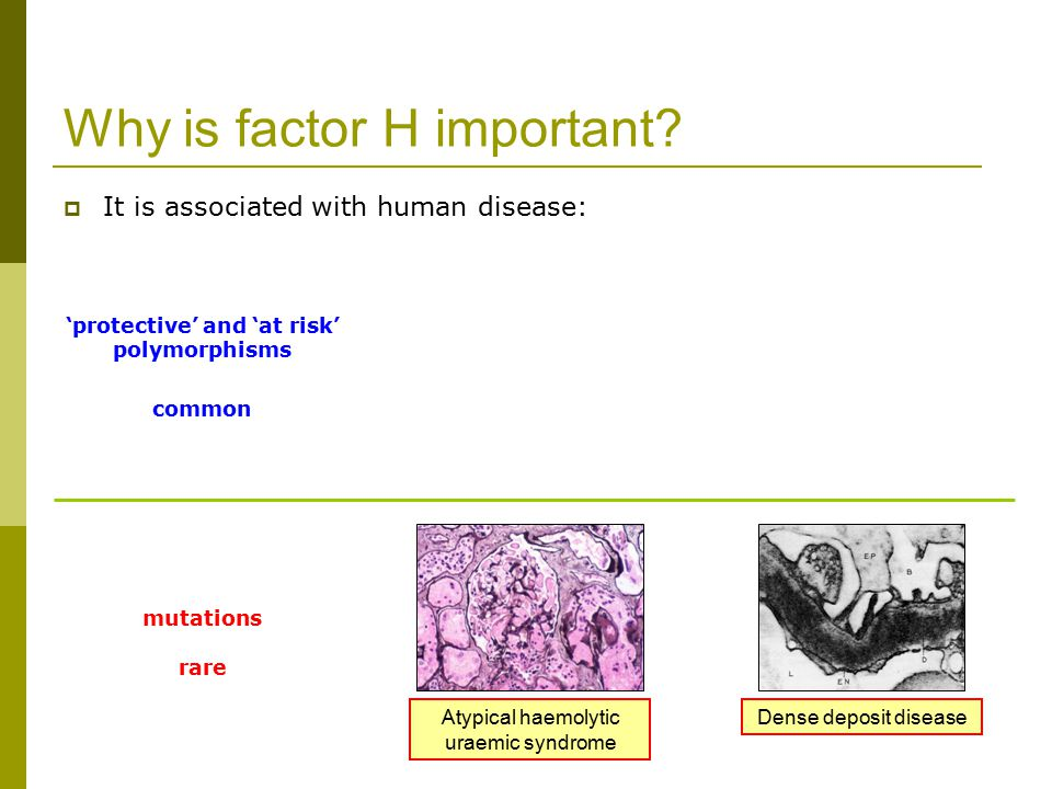 Why is factor H important.
