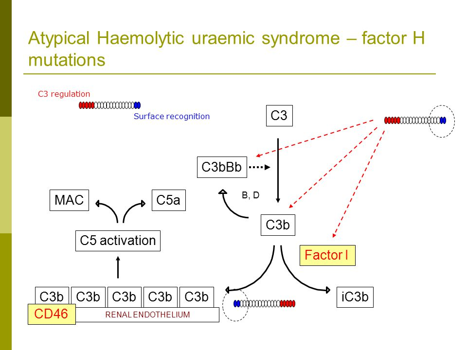 Atypical Haemolytic uraemic syndrome – factor H mutations Factor I iC3b C3b C3 B, D C3bBb HOST SURFACE RENAL ENDOTHELIUM C3b C5 activation MACC5a CD46 C3 regulation Surface recognition
