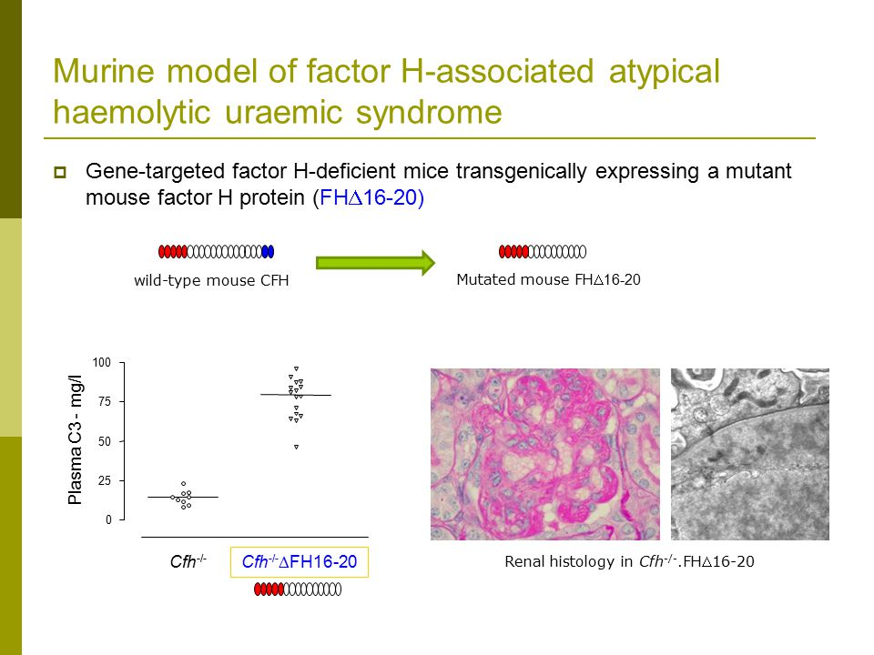 Murine model of factor H-associated atypical haemolytic uraemic syndrome  Gene-targeted factor H-deficient mice transgenically expressing a mutant mouse factor H protein (FH  16-20) Cfh -/-  FH16-20 Cfh -/- 0 25 50 75 100 Plasma C3 - mg/l wild-type mouse CFH Mutated mouse FH 16-20 Renal histology in Cfh -/-.FH16-20