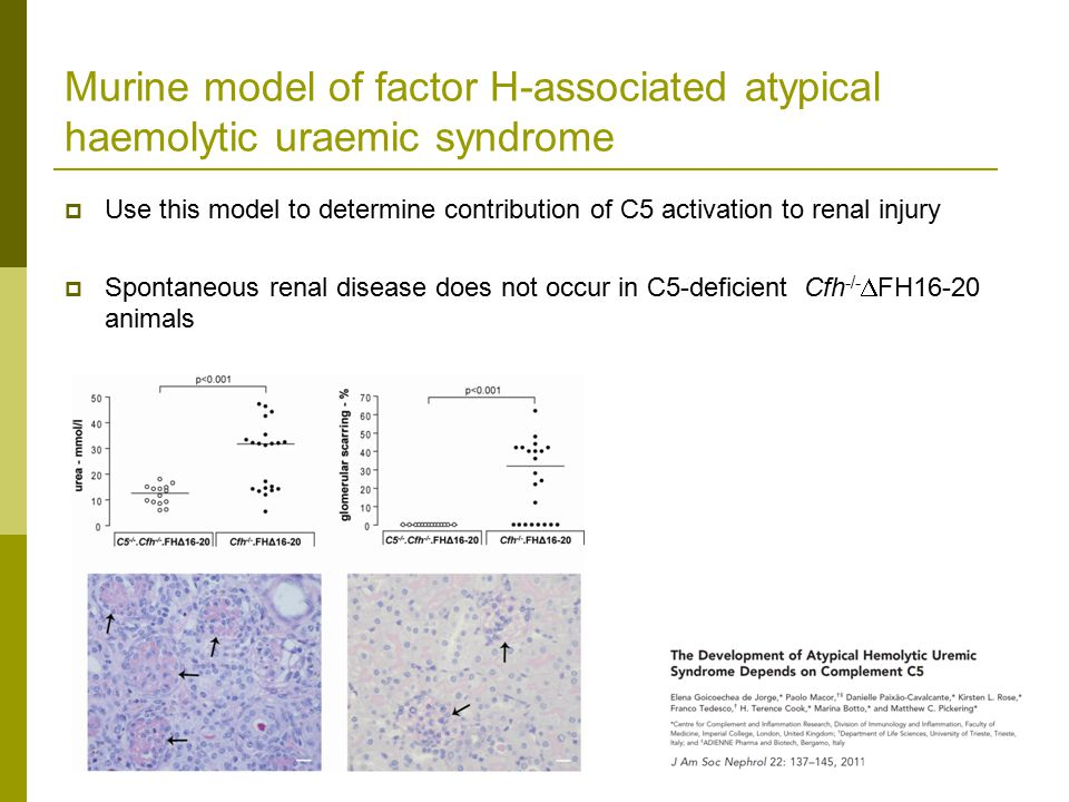 Murine model of factor H-associated atypical haemolytic uraemic syndrome  Use this model to determine contribution of C5 activation to renal injury  Spontaneous renal disease does not occur in C5-deficient Cfh -/-  FH16-20 animals