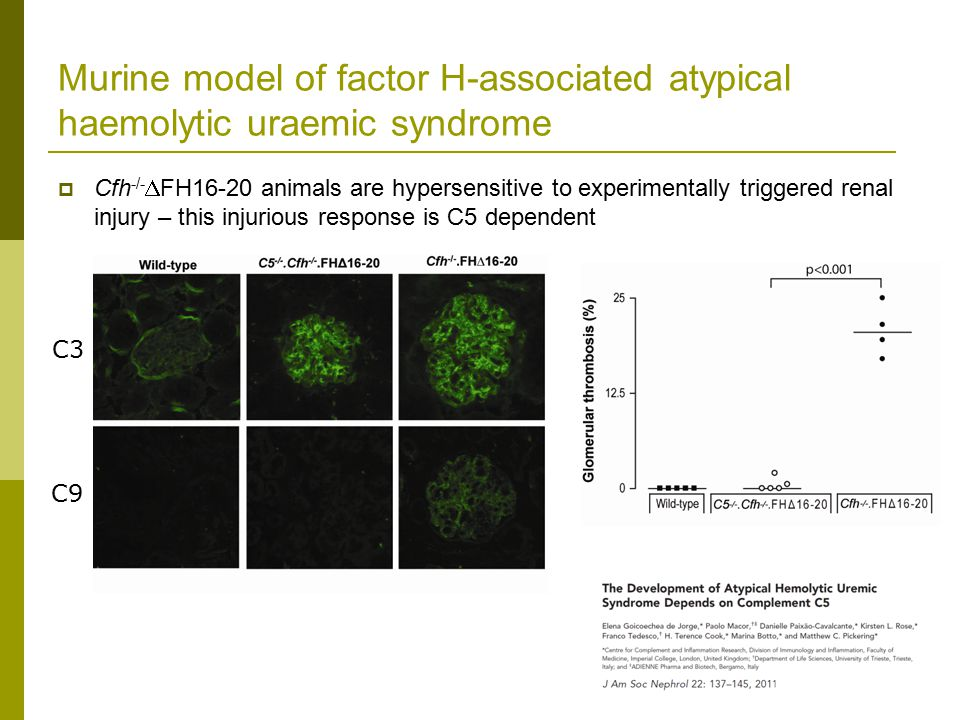 Murine model of factor H-associated atypical haemolytic uraemic syndrome  Cfh -/-  FH16-20 animals are hypersensitive to experimentally triggered renal injury – this injurious response is C5 dependent C3 C9