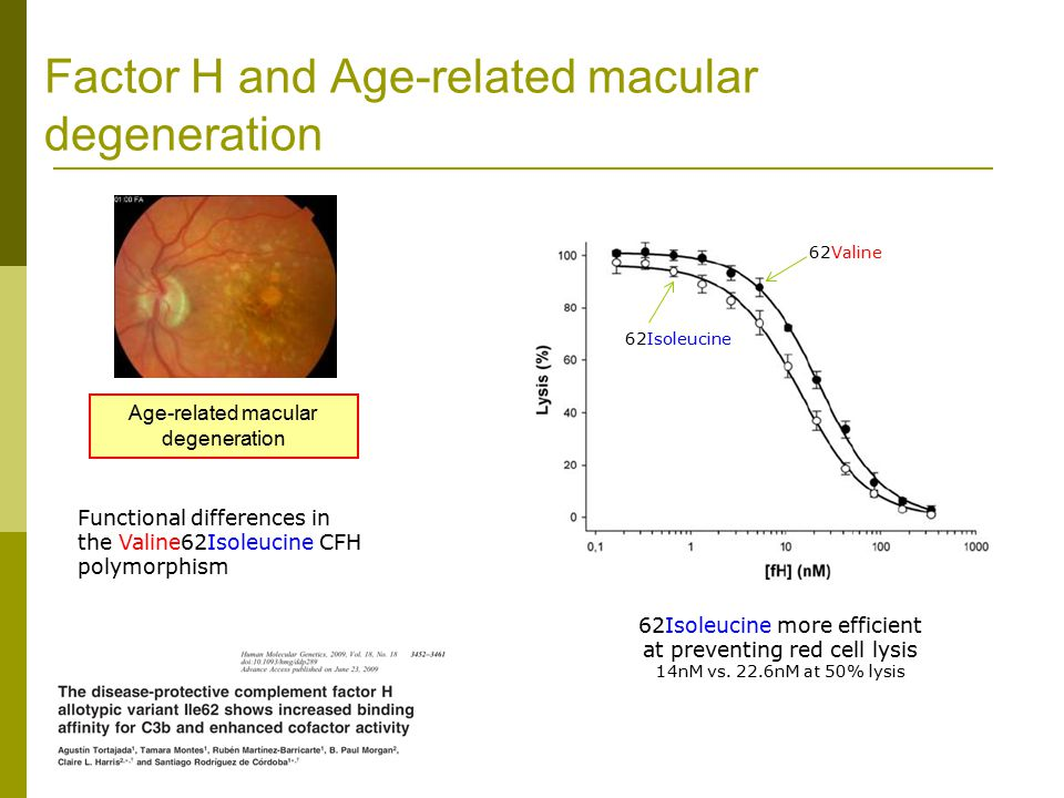 Age-related macular degeneration Functional differences in the Valine62Isoleucine CFH polymorphism 62Isoleucine more efficient at preventing red cell lysis 14nM vs.