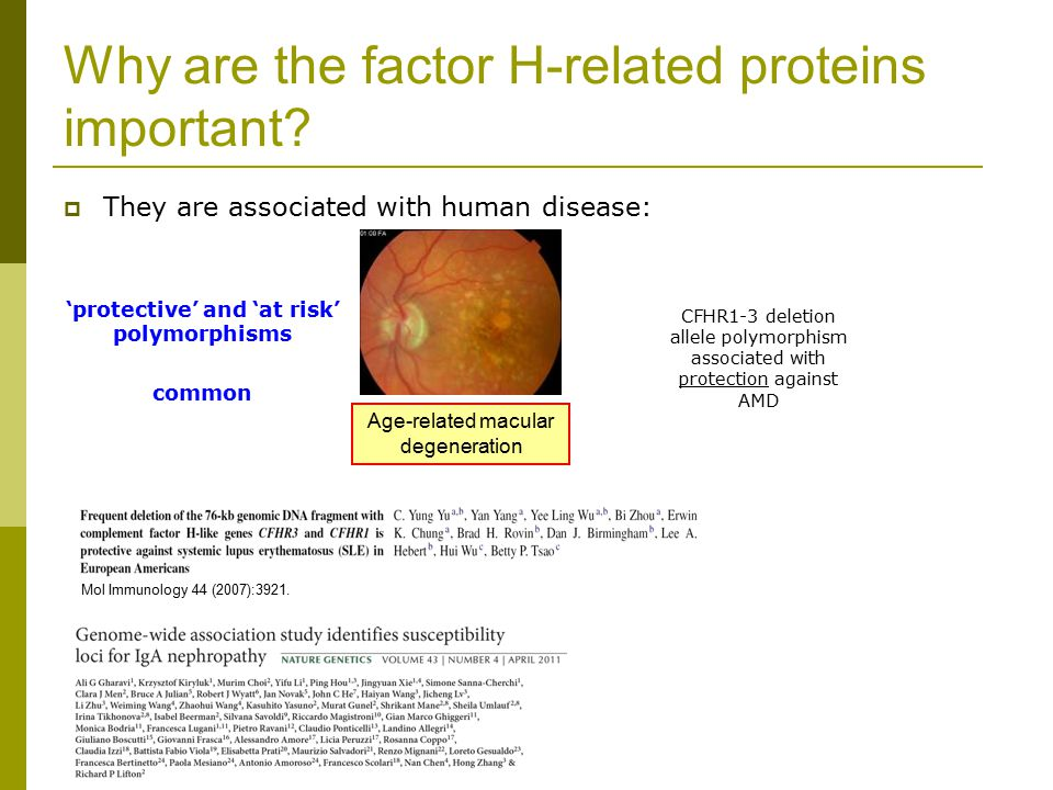 Why are the factor H-related proteins important.