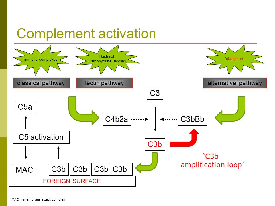 C3b C3 C3b FOREIGN SURFACE C3b 'C3b amplification loop' Complement activation lectin pathway Bacterial Carbohydrate, ficolins C4b2a classical pathway immune complexes C3bBb alternative pathway 'always on' C5 activation MAC C5a MAC = membrane attack complex